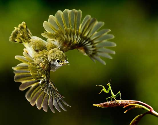 Bird with Praying Mantis