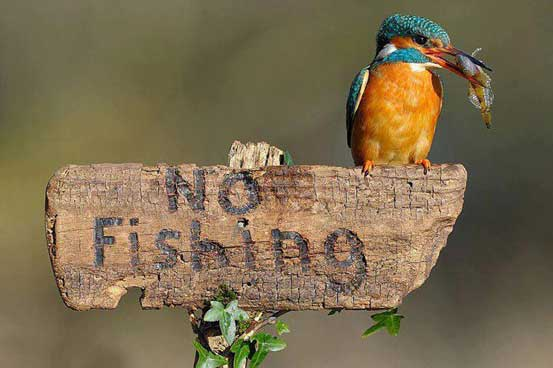 Kingfisher as king of his domain